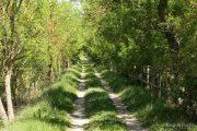 Camí de Mornau 0449 (*)
