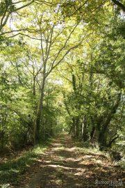 Camí de Mornau 0926 (*)