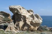 Roca Daliniana 0462 (*)