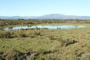 Bassa del Serrat de les Garrigues 3045 (*)