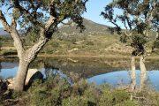 Estanyol de la Cardonera (Estanys de Gutina) 3132 (*)