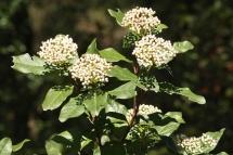 Arbusts i lianes