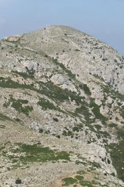 Puig Rodó 0968 (*)