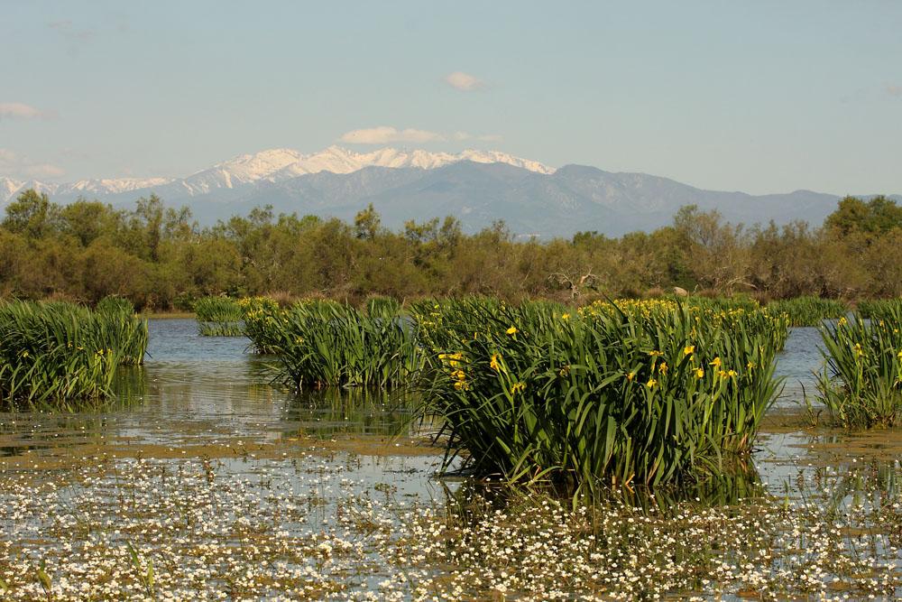 Ramon Fortià - paisatges
