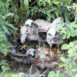 Tots-tres-polls
