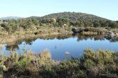 Bassa de la Rajoleria (Estanys de Gutina) 3136 (*)
